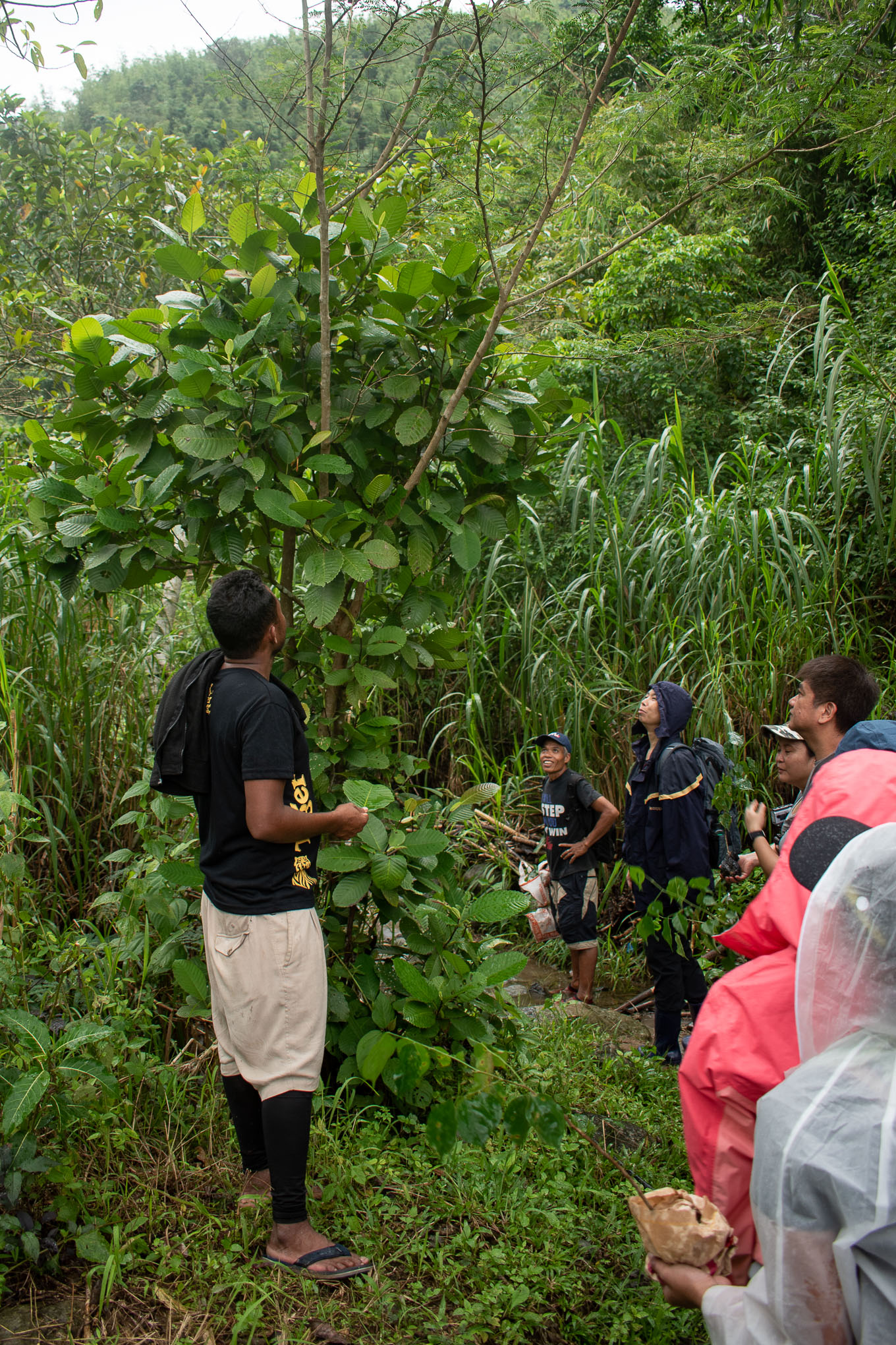 Guided Hike in Mt. Mapalad with Dumagat with discussions on native trees & forests